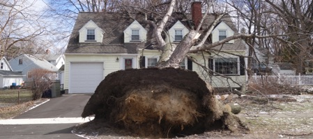 Wind blown oak tree on Pearl Avenue house in Rochester, New York