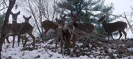 Eight deer in Irondequoit