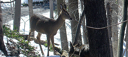 Deer outside bedroom window
