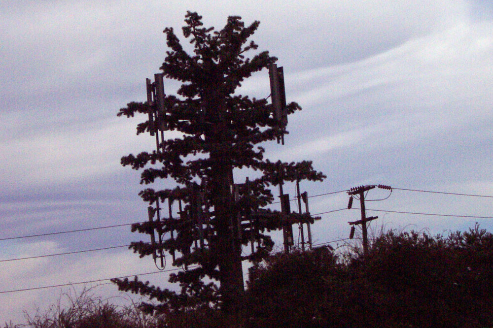 Fake tree off freeway in Los Angeles