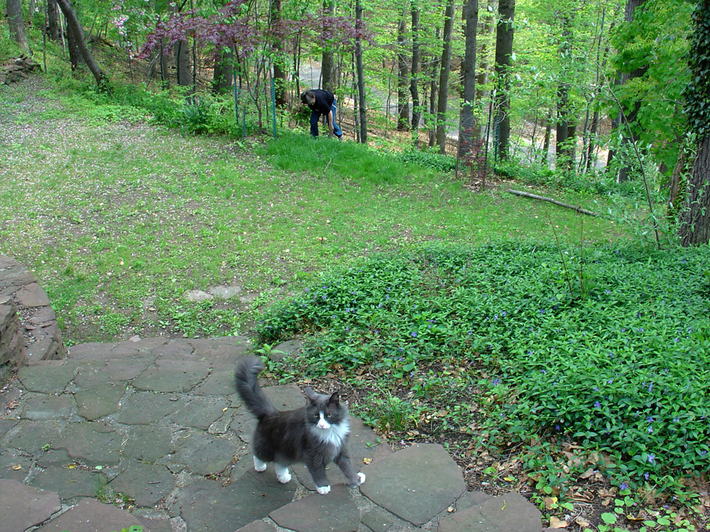 Ornette the cat
