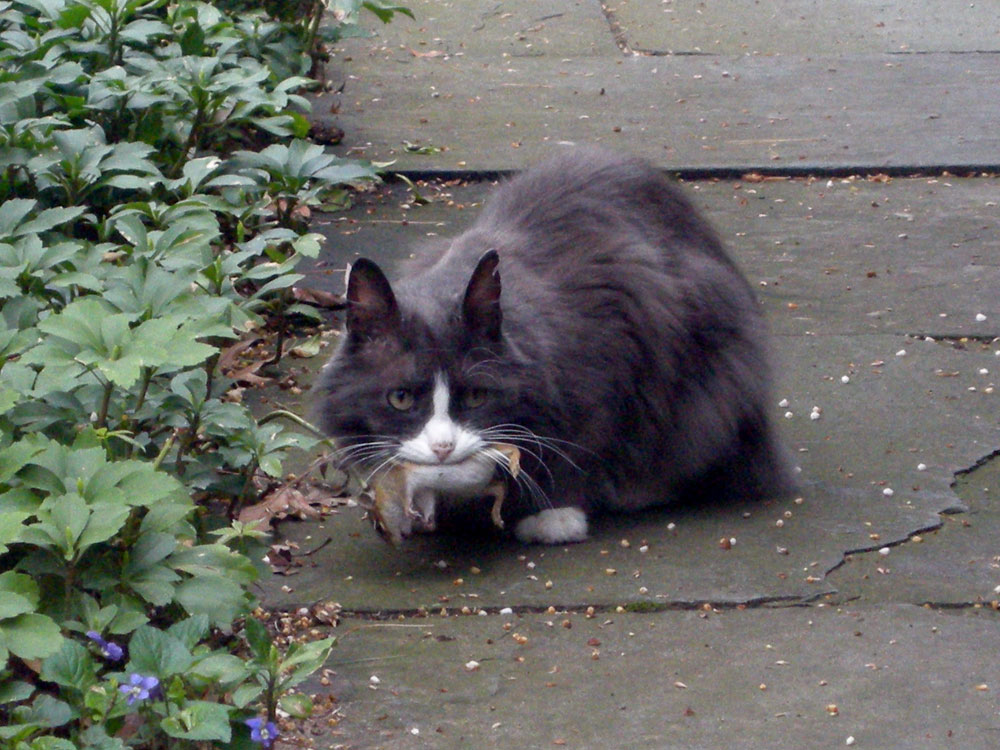 Ornette out front with his first chipmunk of the year