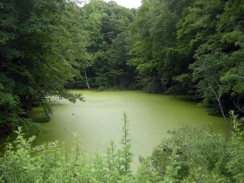 Green pond in Durand Eastman Park