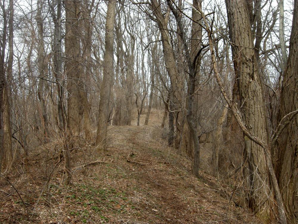 Spring Valley Finger overlooking marsh in Durand Eastman Park