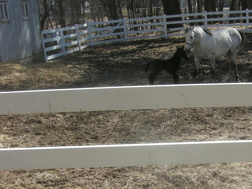 Tiny horse (born five days ago) and mom