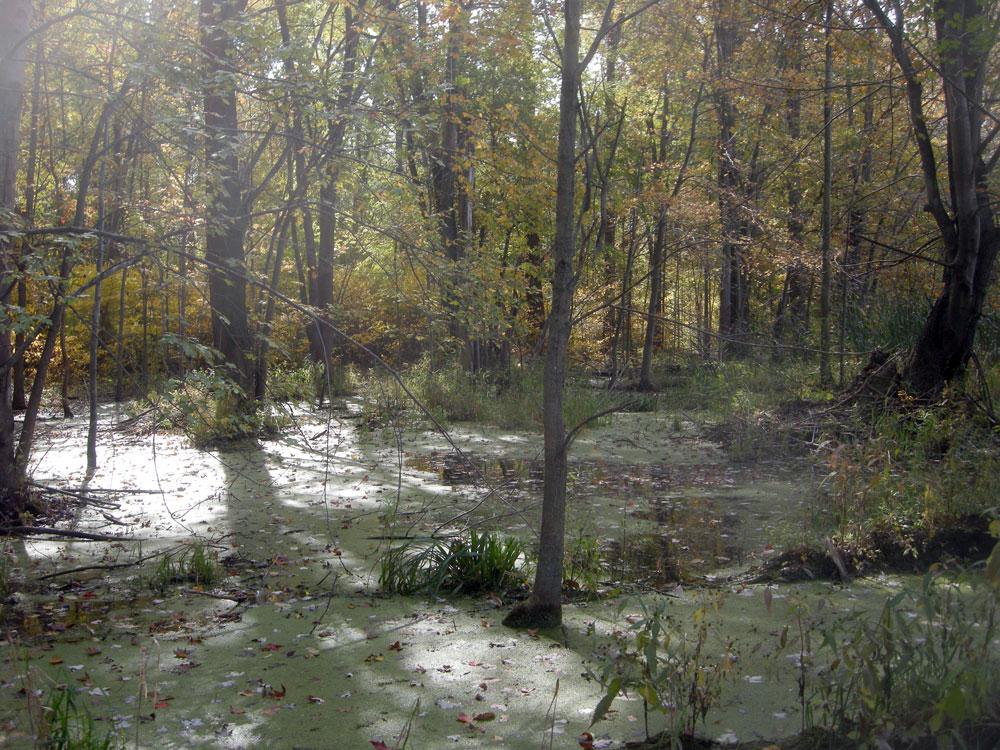 1000 Acre Swamp wetlands near Rochester, NY