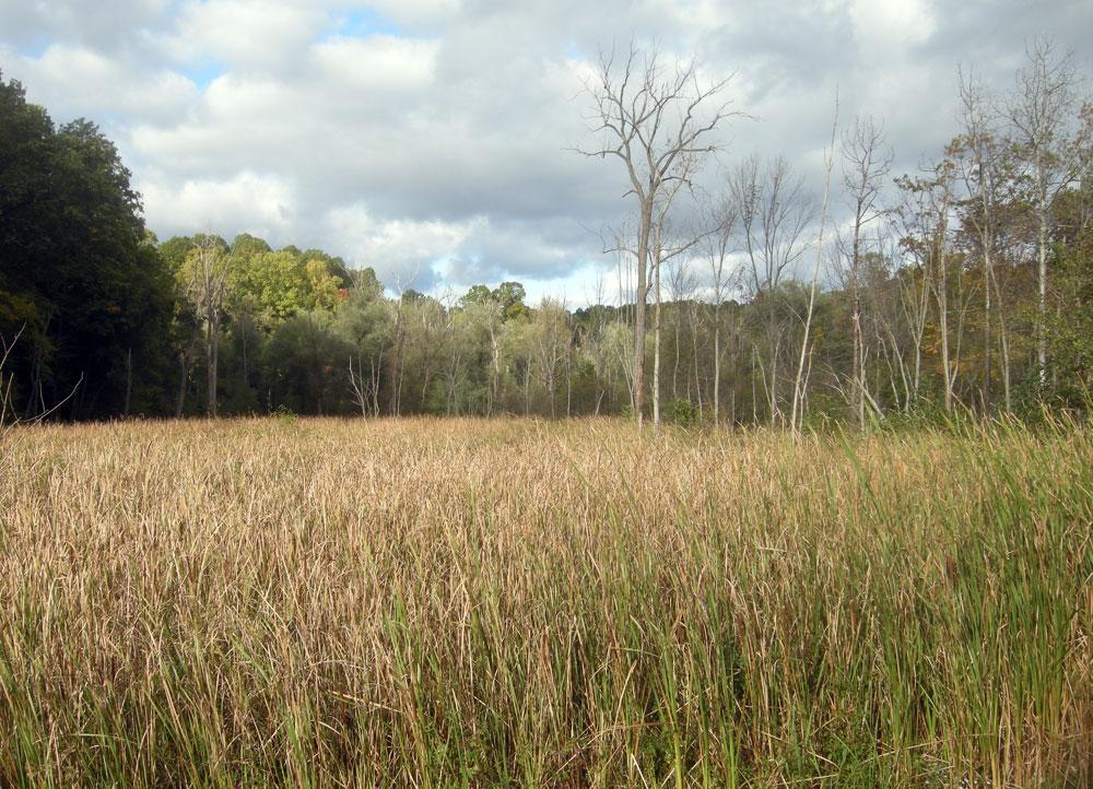 Wetlands off Hoffman Road in Rochester, New York, September 2010