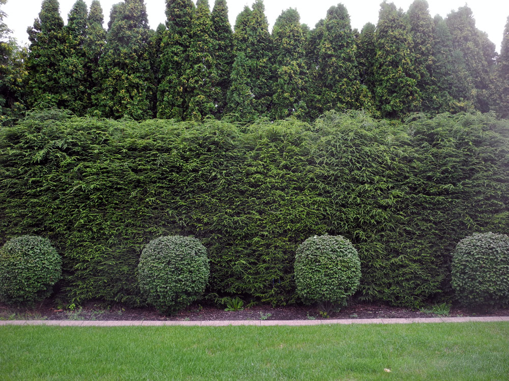 3 rows of shrubs in Rochester NY