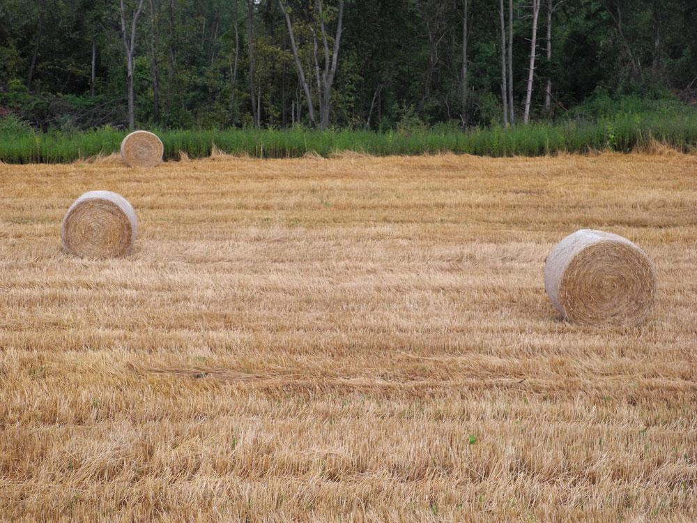 Rolls of hay near Potter NY