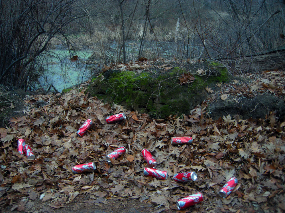 22 ounce Budweiser cans on Hoffman Road in Rochester, New York