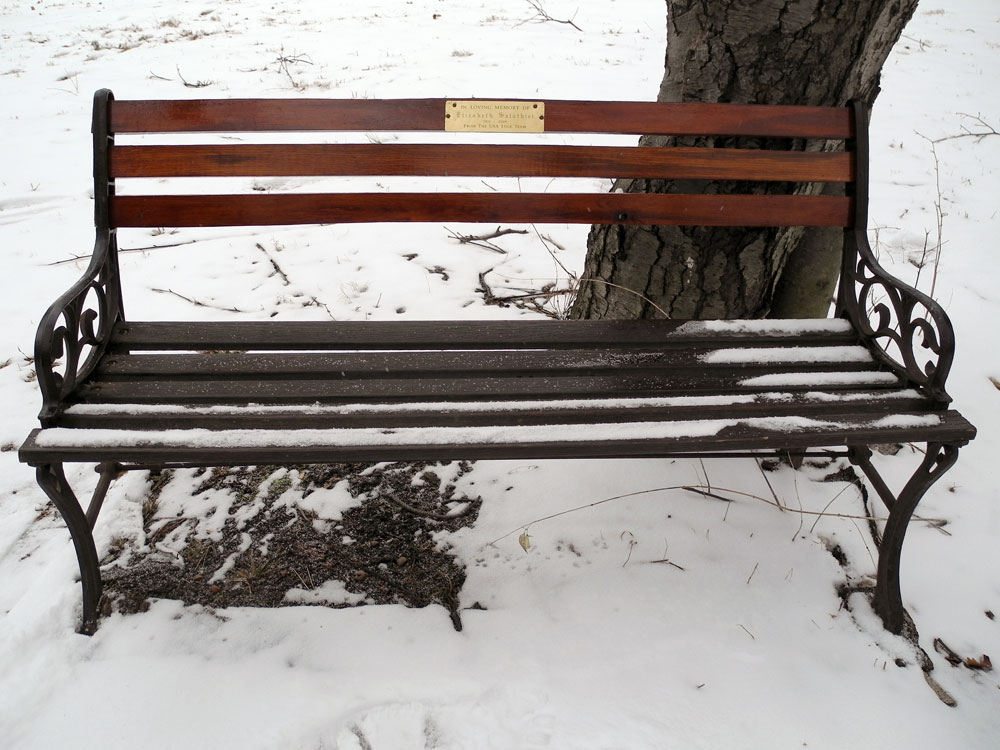 Bench in Durand Eastman Park at the top of the luge hill.