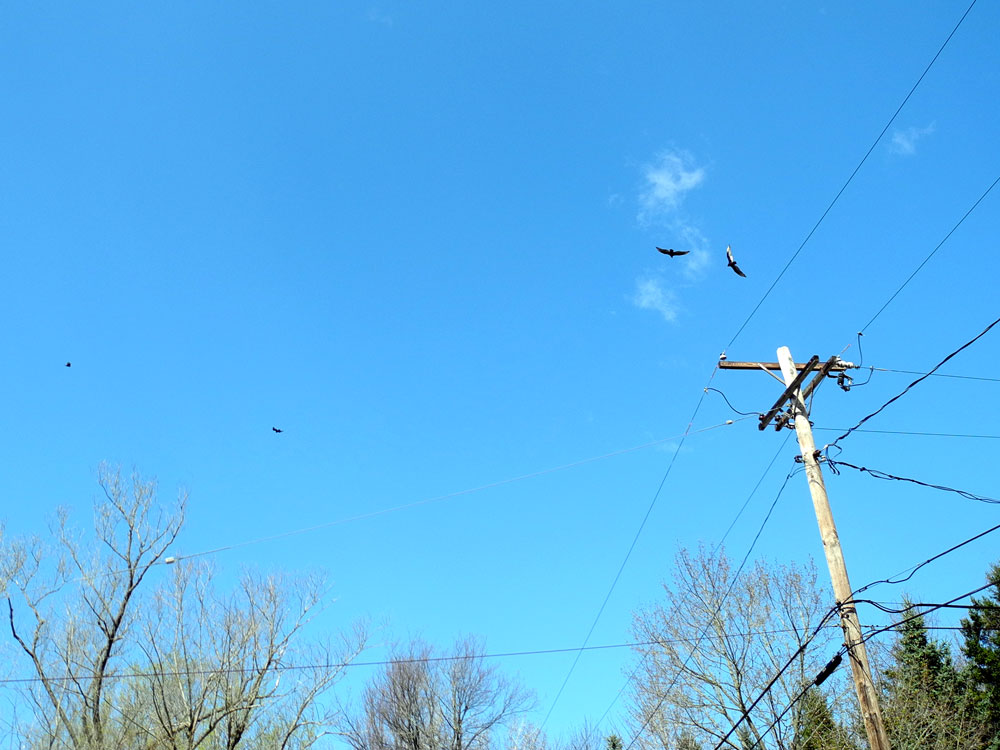 Four hawks in blue sky, Rochester, New York