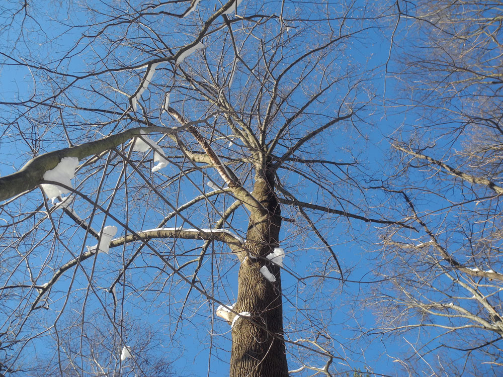 Winter branches against a blue sky