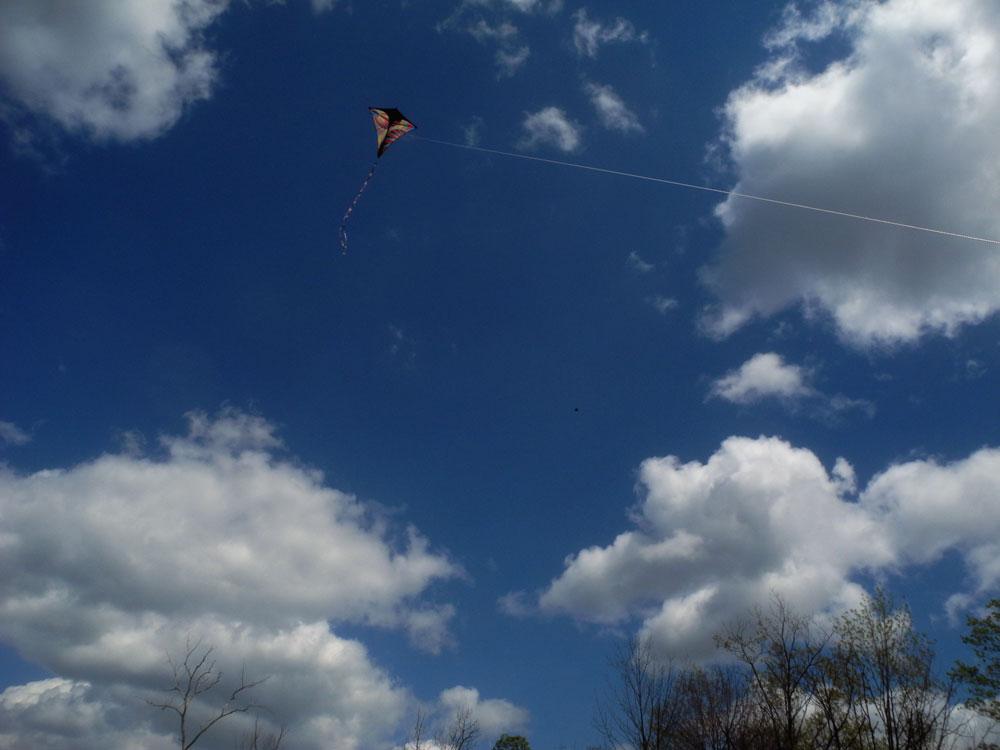 Kite flying over marsh on Hoffman Road