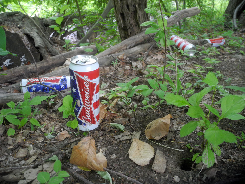 Patriotic Budweiser beer cans in woods of Hoffman Road in Rochester, New York