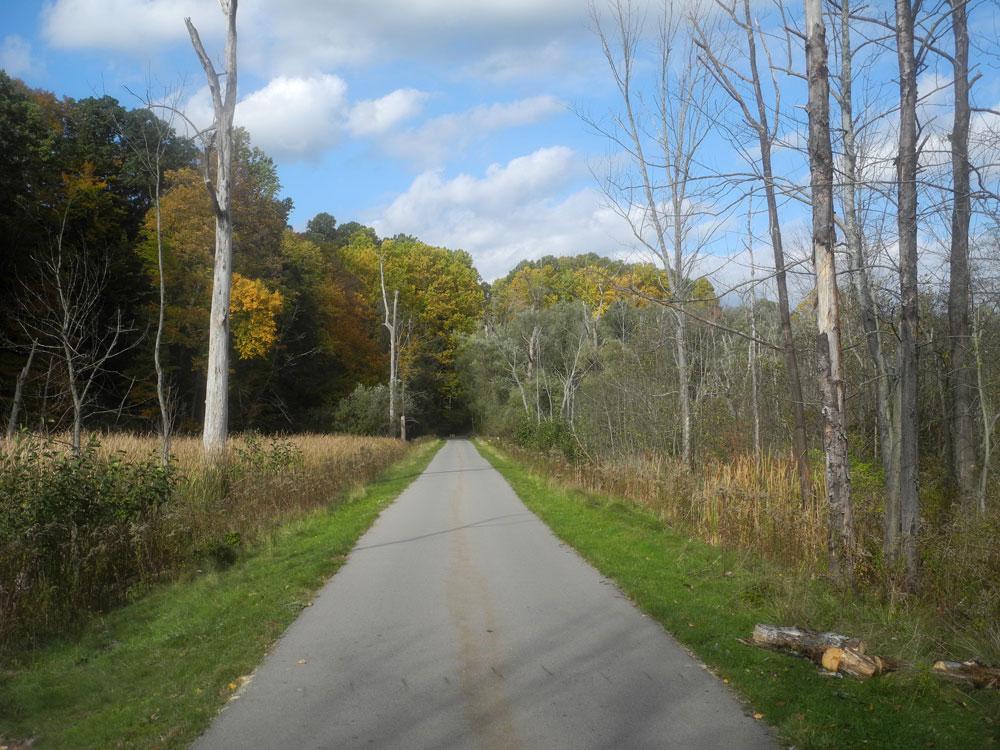 Conifer Lane Autumn 2013