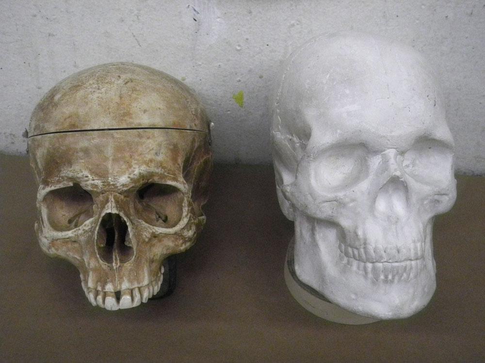 Two skulls in art class
