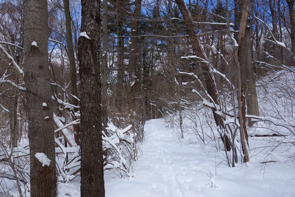 Last ski through the woods, March 14, 2014
