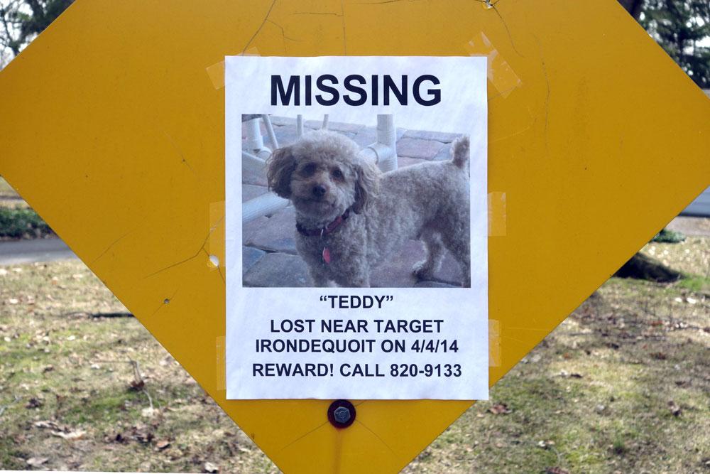 Missing dog Teddy reward sign