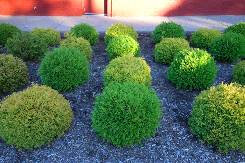Manicured shrubs near Parkleigh in Rochester, New York