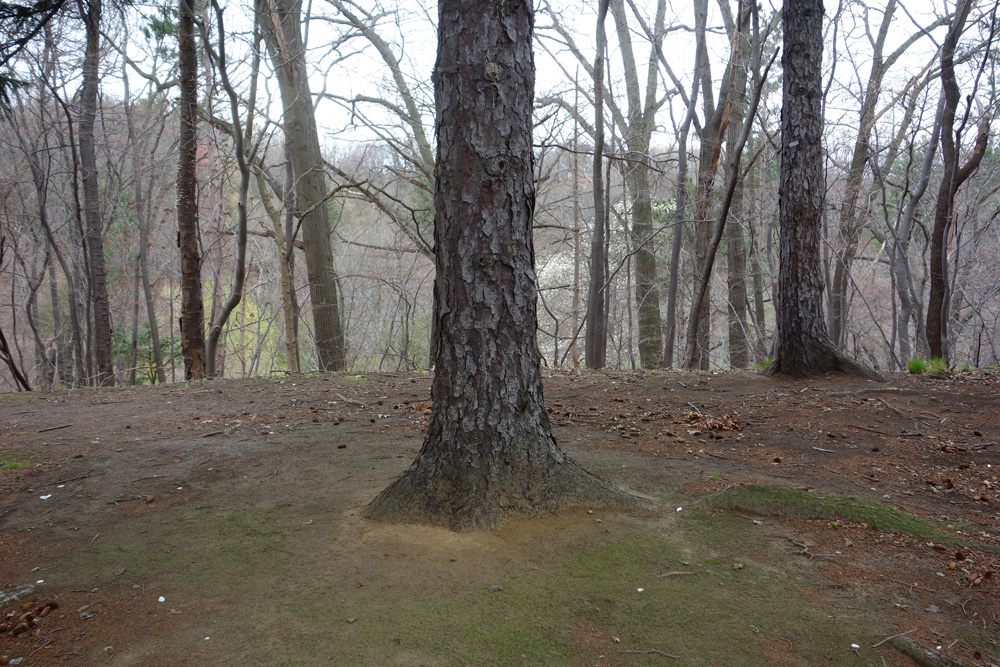Hilltop with tree trunk in Durand Eastman Park