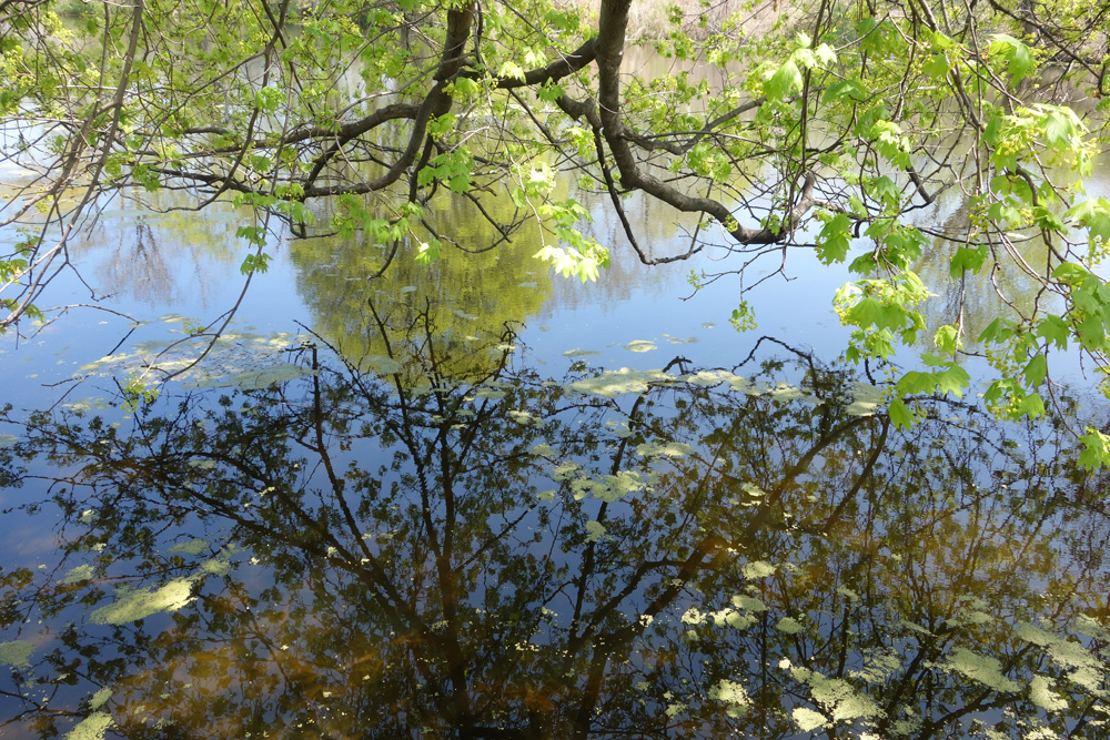 Reflection on Johnson Pond in Durand Eastman Park