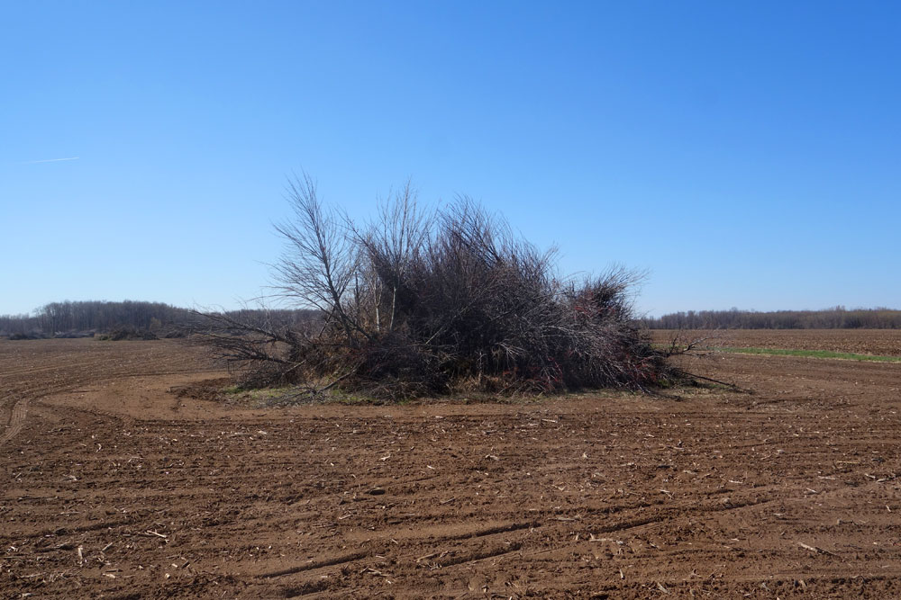 Brush pile in farm field along Lake Ontario Parkway