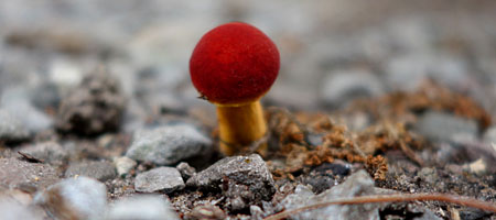 Tiny red mushroom in driveway