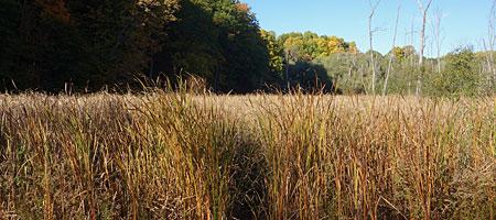 Marsh off Hoffman Road in Rochester, New York
