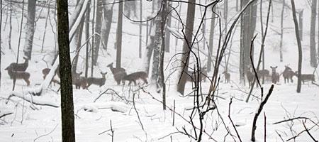 Twenty deer in the Commons near Durand Eastman Park