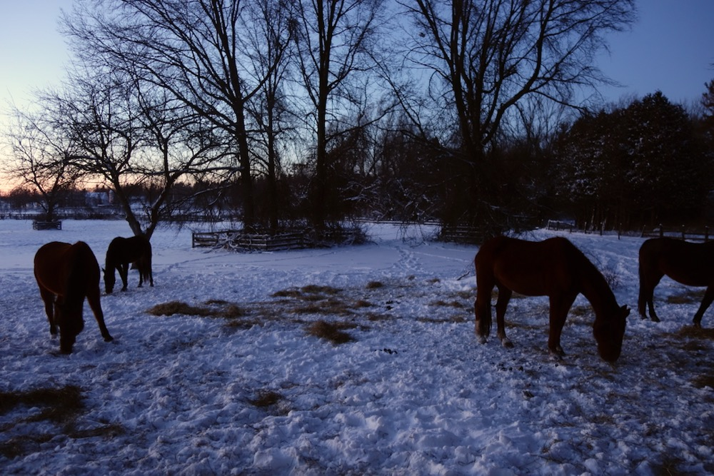 Four horses in Scotsville