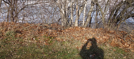 Small trees and my shadow along Lakeshore Boulevard
