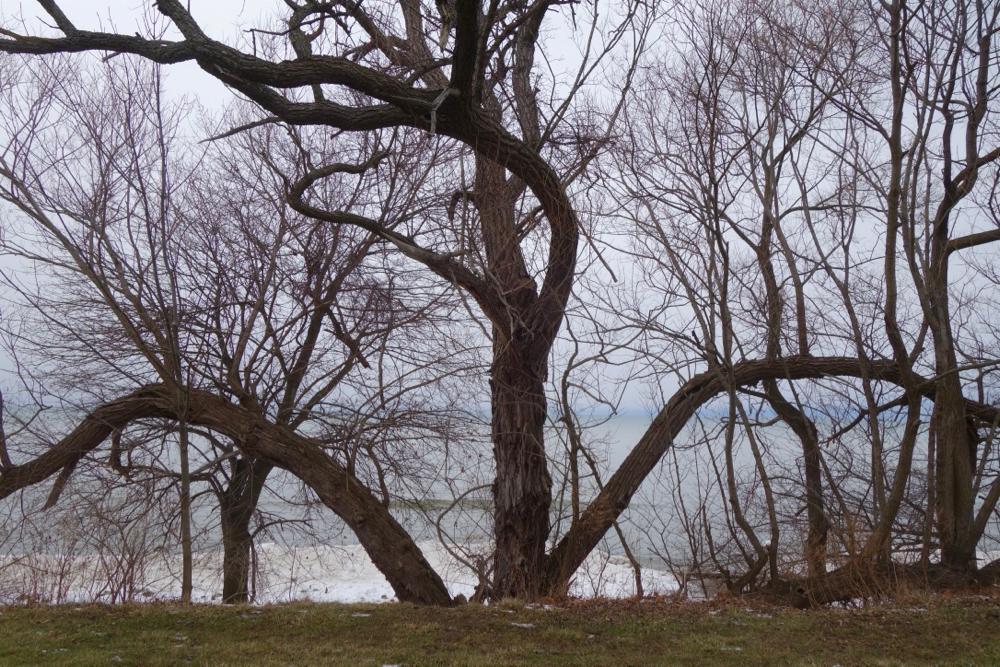 Bending tree along shore at Durand Eastman Beachlg