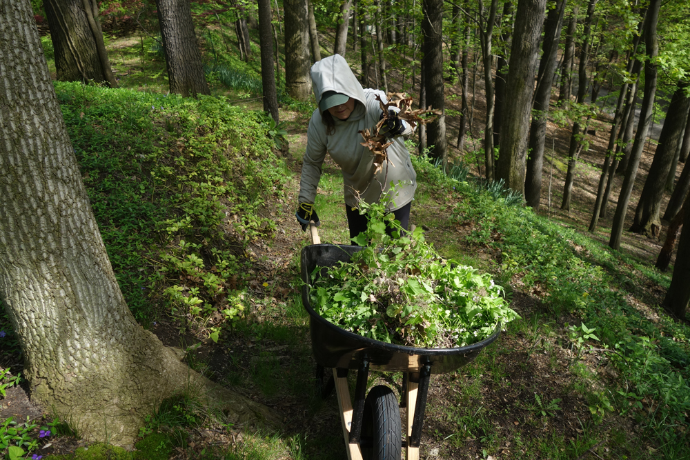 Peggi, suited in tick gear, clearing Garlic Mustard from hillside out back.