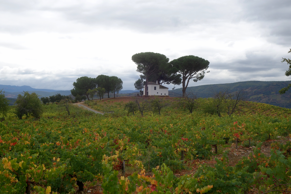 Vineyard near Villafranca Del Bierzo on the Camino de Santiago