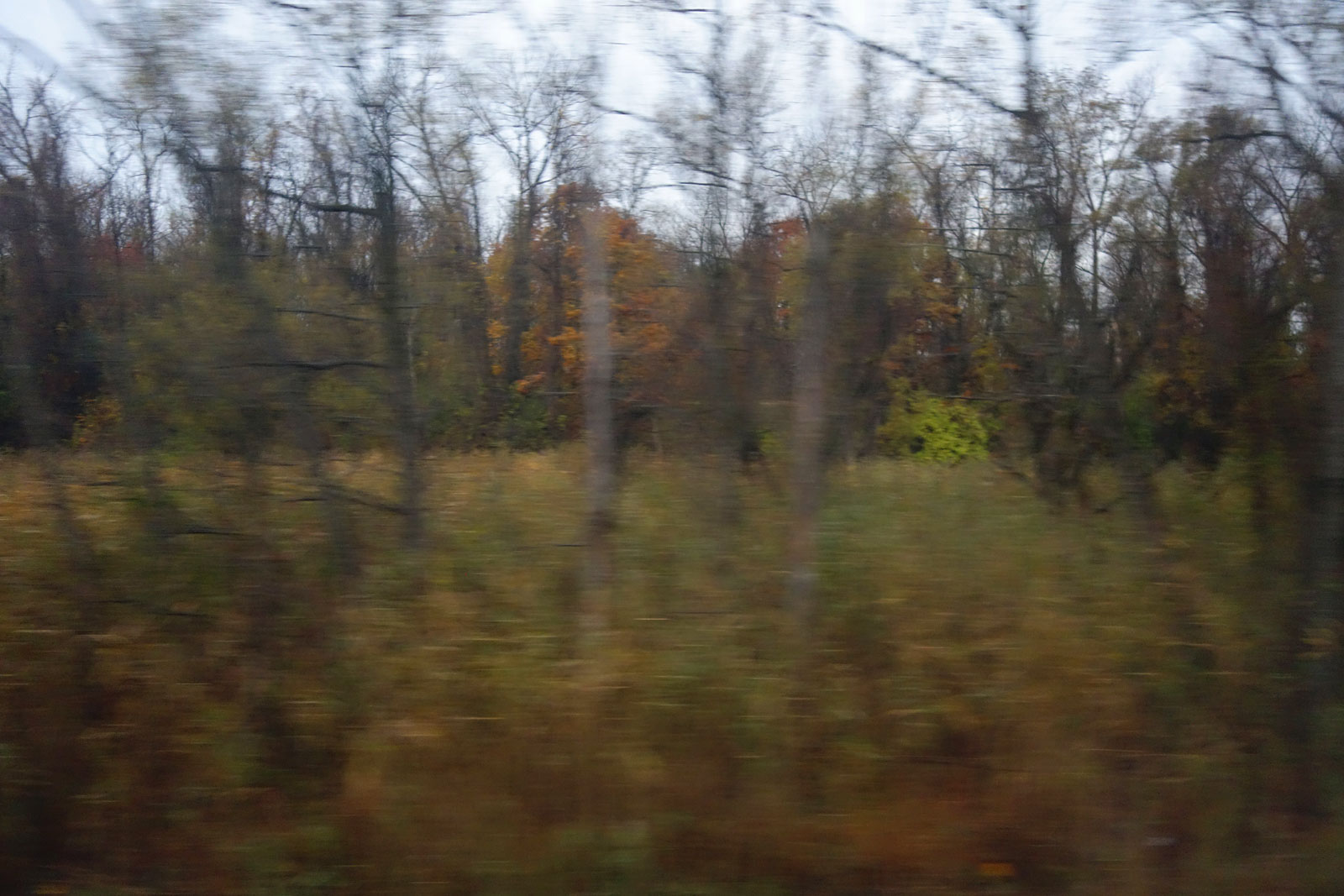 Blurry Autumn trees from train