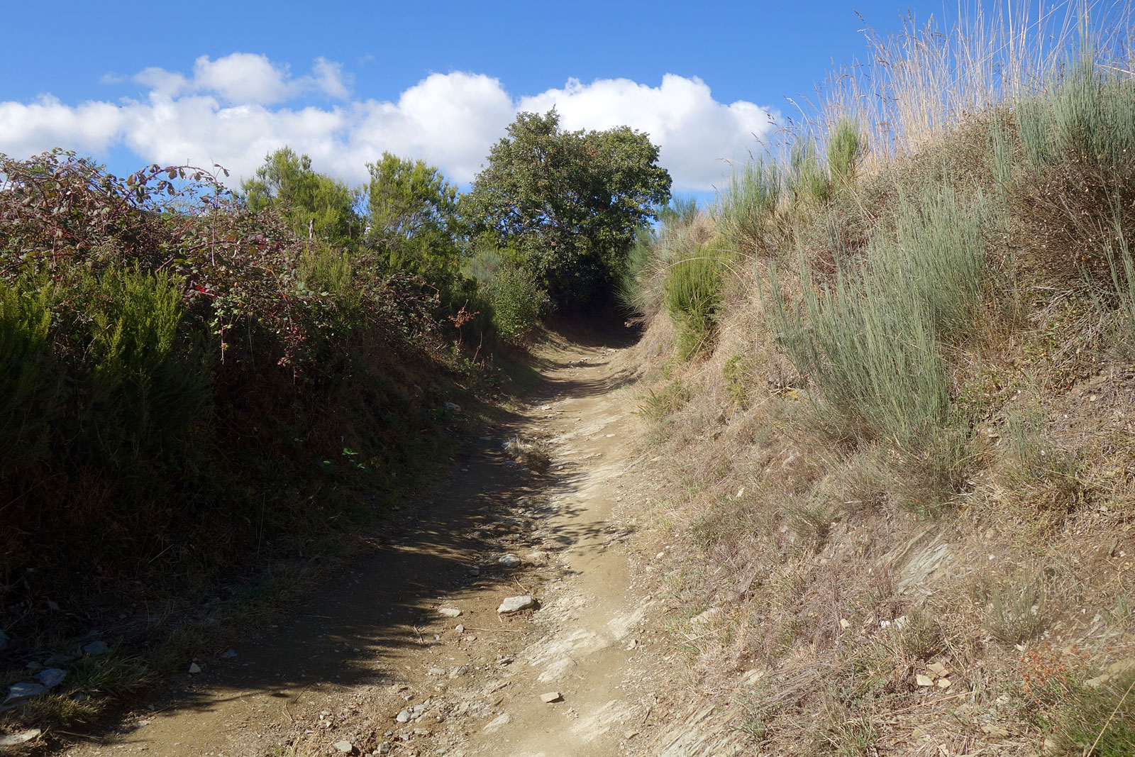 Sort of rugged Camino path near Leon