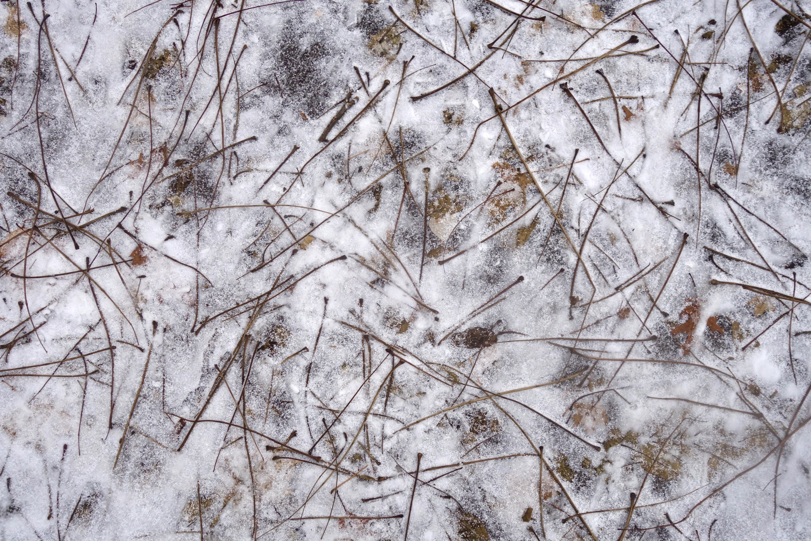 Twigs drawing on pavement with snow