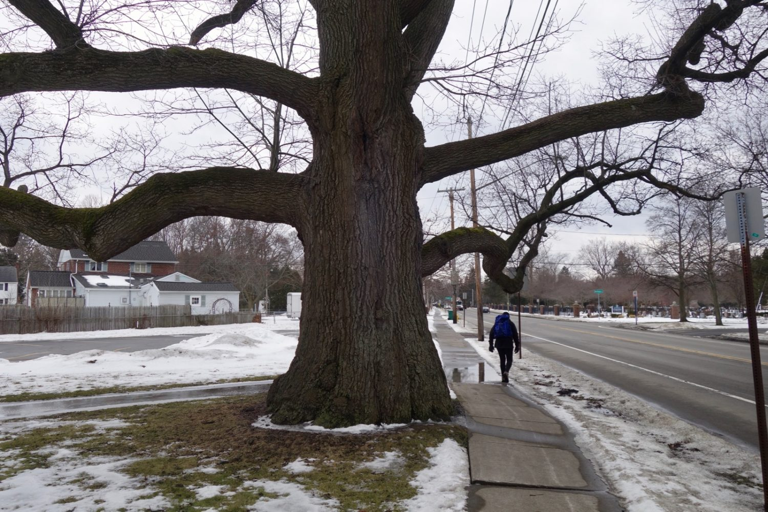 Peggi with backpack under 250 year old old tree on Culver Road