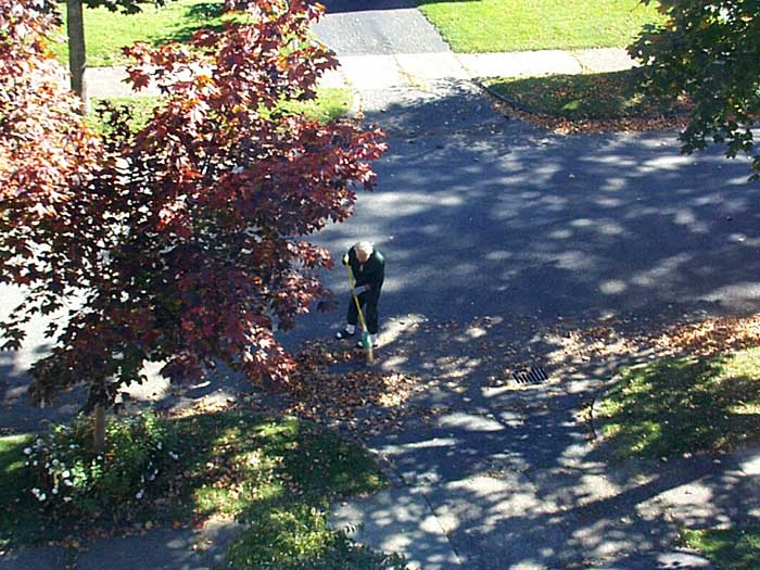 Sparky sweeping leaves out front of our house.