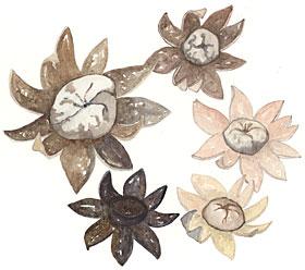 Earthstars (Astraeus hygrometricus)