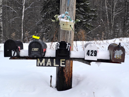 Male Boxes in the Adirondacks