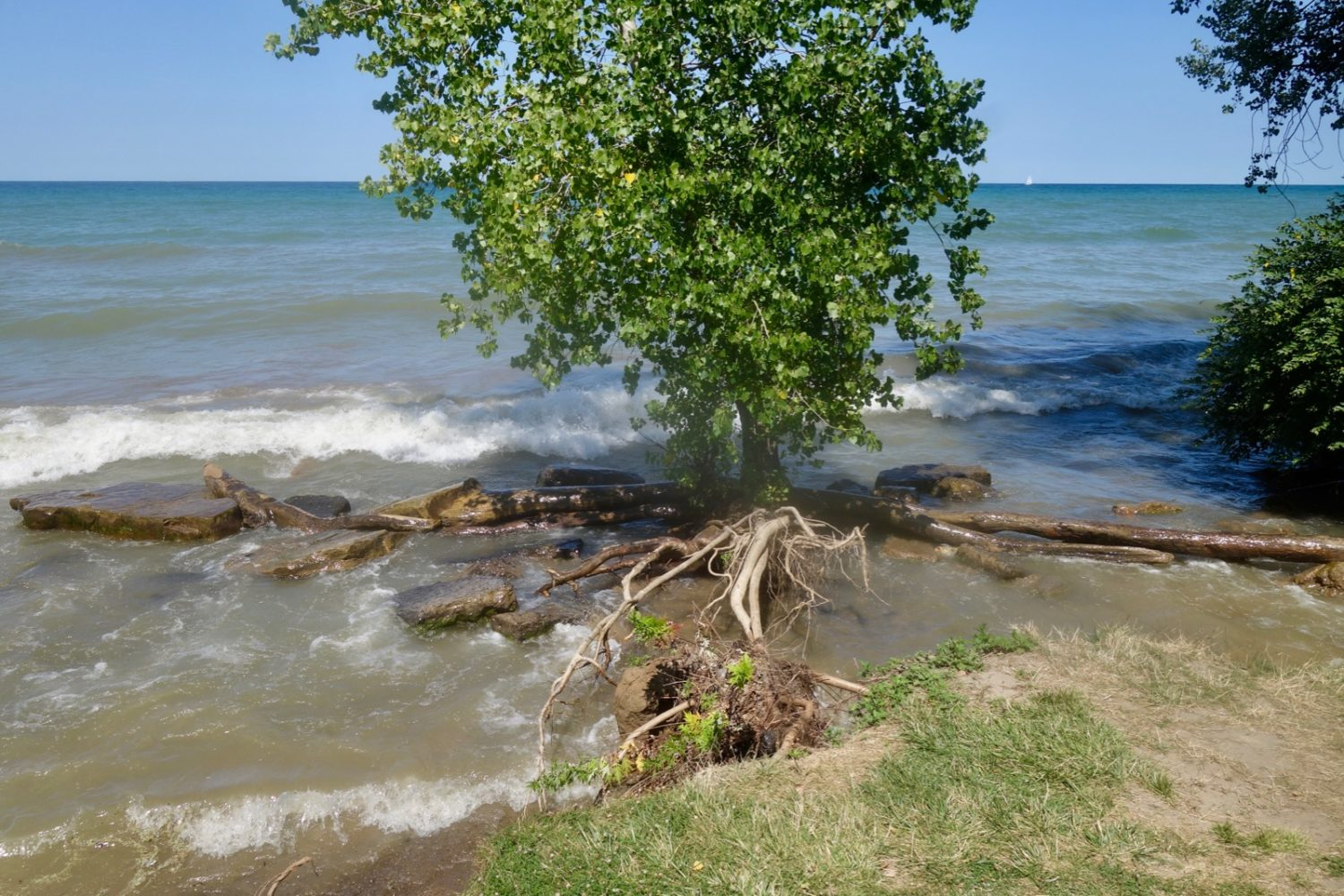 Tree roots exposed along Durand Eastman Beach