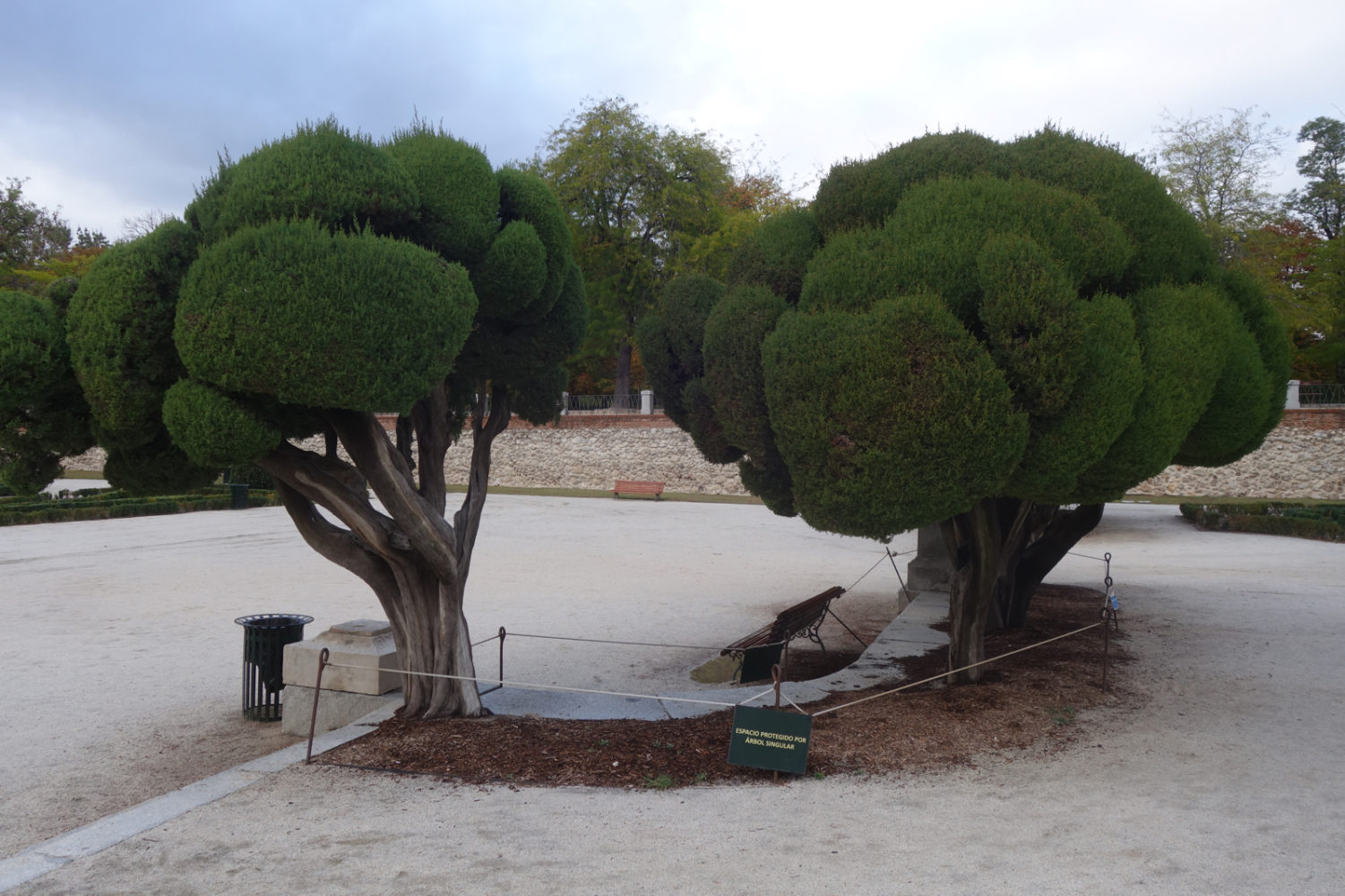 Trees in Retiro Park, Madrid.