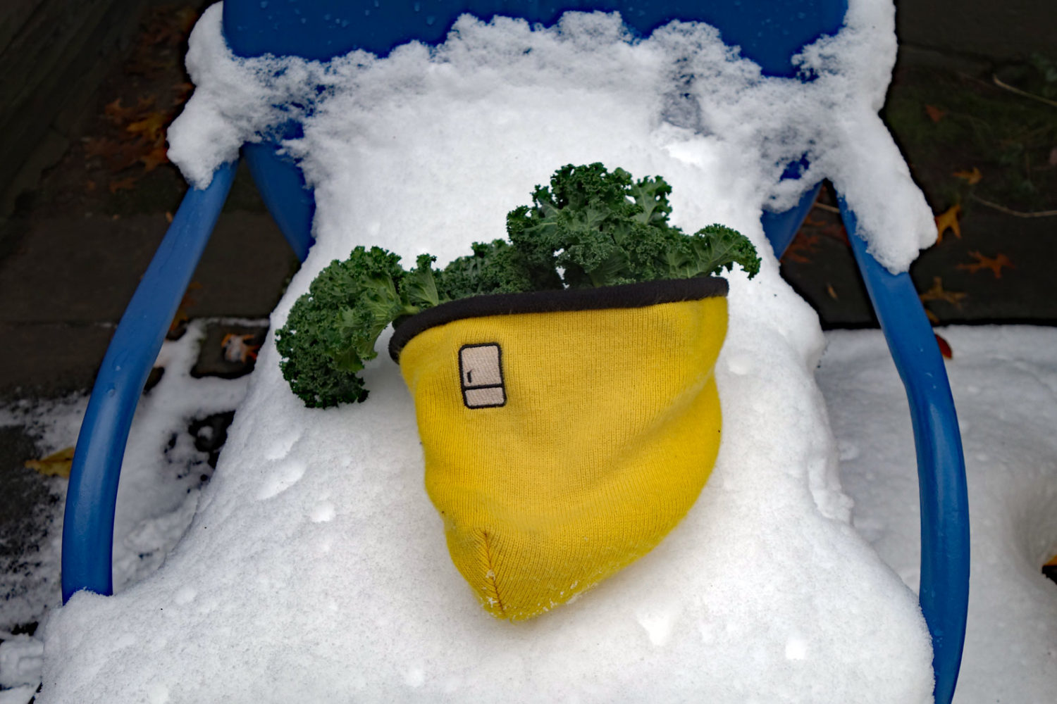 Fresh Kale from the garden in Refrigerator Hat