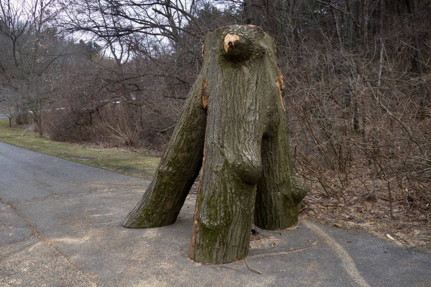 Tree sculpture on Log Cabin Road in Rochester, New York