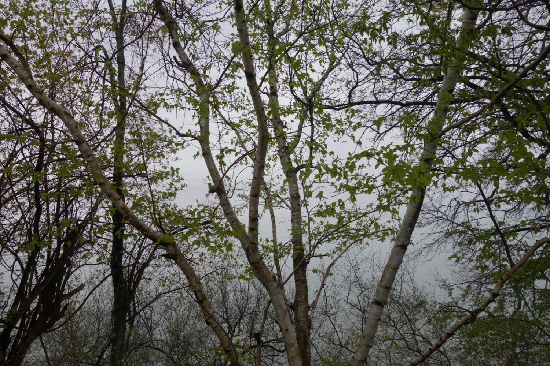 Trees along Lakeshore Boulevard with misty horizon on lake