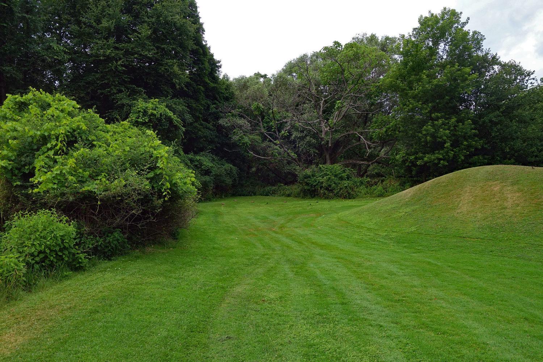 Four woodchucks on golf course.