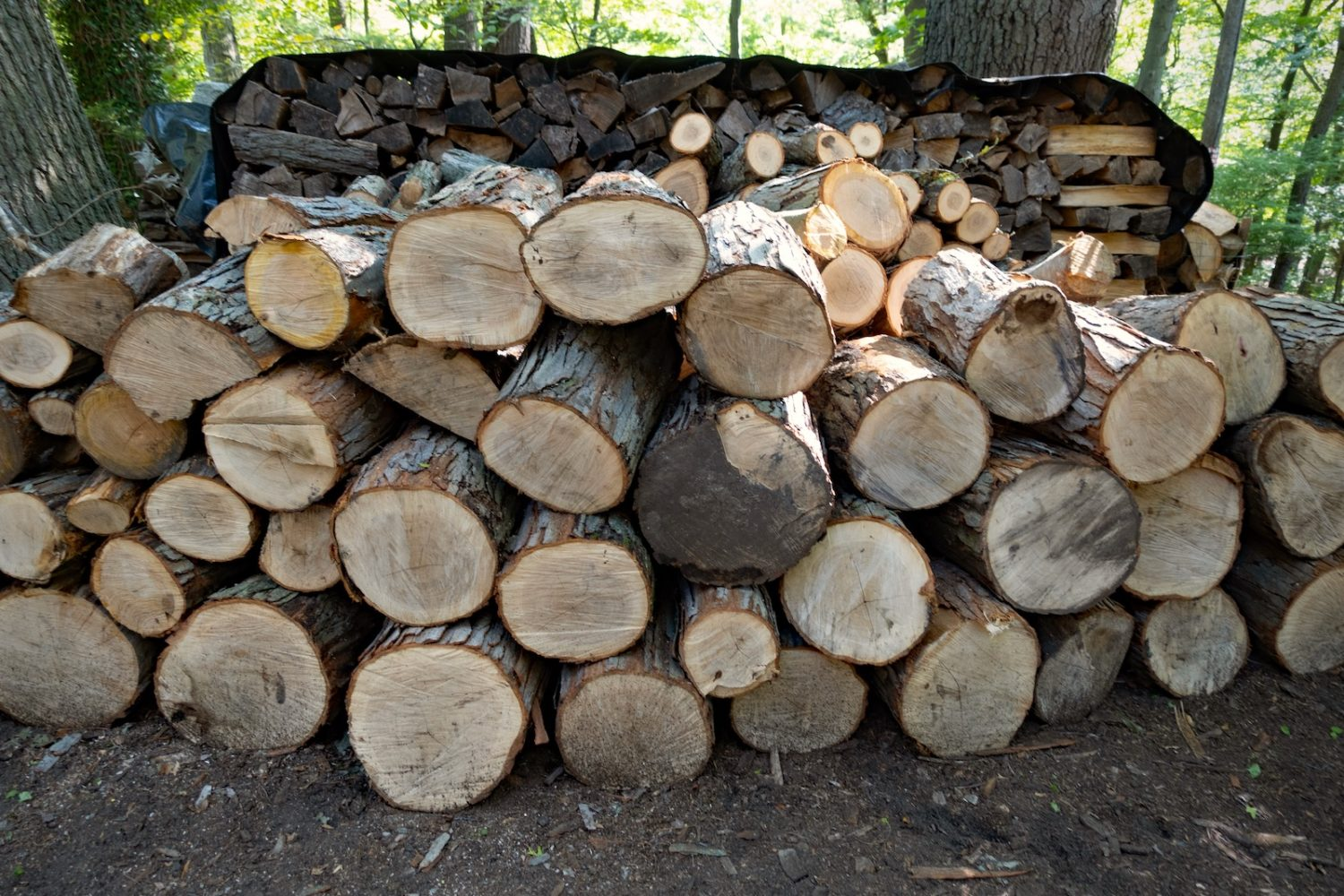 Front view of our wood pile, August 2020