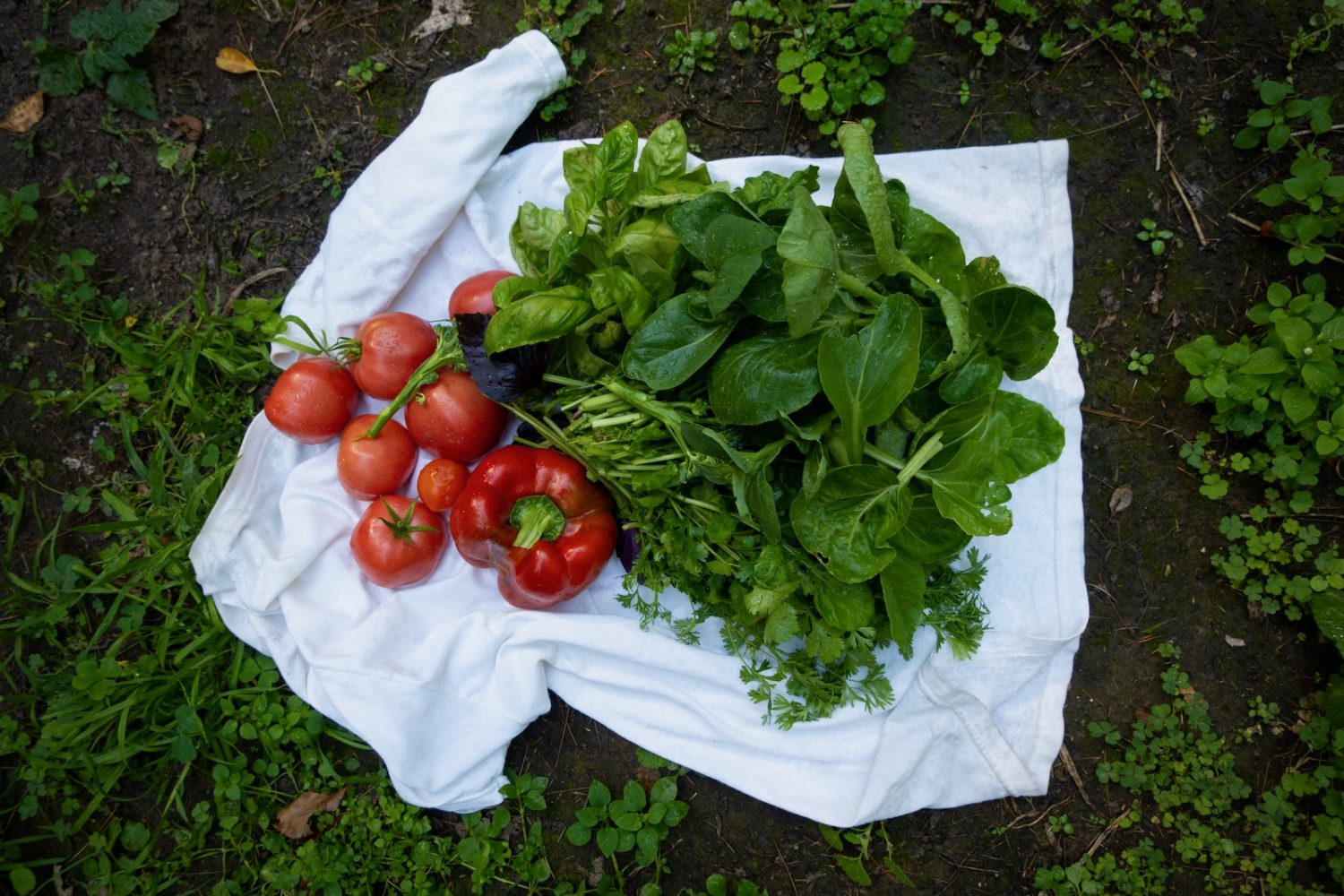 More produce from the garden.